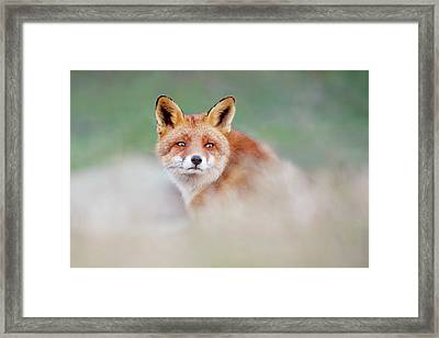 Who...? Moi? - Red Fox Looking Over Its Shoulder Framed Print by Roeselien Raimond