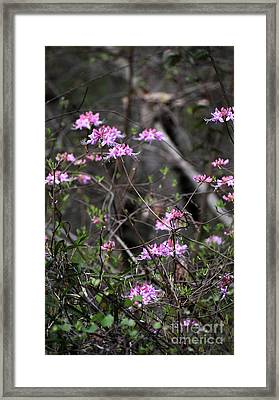 Framed Print featuring the photograph Who Put The Wild In Wildflowers by Skip Willits