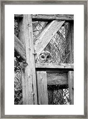 Who Framed Print by Samantha  Backhaus