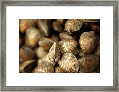 Whole Clams Framed Print