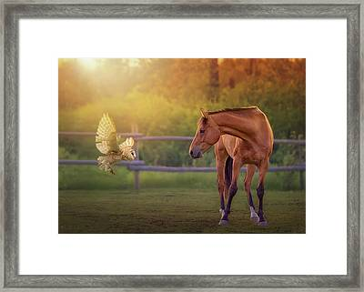 Whoo Are You? Framed Print