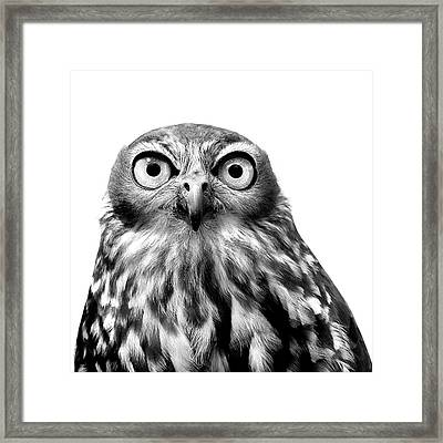 Whoo You Callin A Wise Guy Framed Print