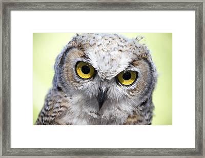 Whooo Framed Print