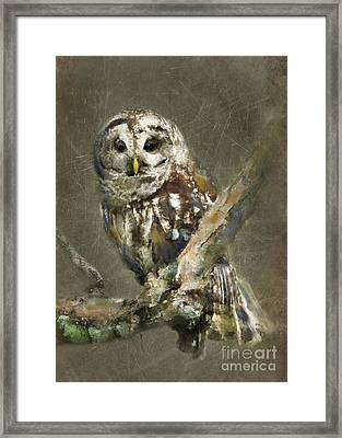Whoooo Framed Print by Betty LaRue