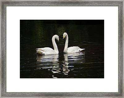 Framed Print featuring the photograph Whooper Swans by Sandy Keeton