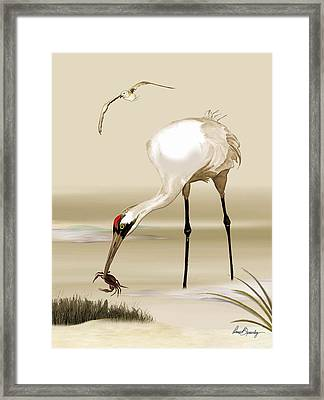 Whooping Crane Framed Print by Anne Beverley-Stamps