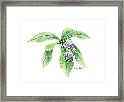 Whorled Wood Aster Framed Print by Betsy Gray