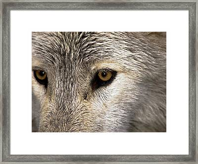 Whos Afraid Framed Print by Jim DeLillo