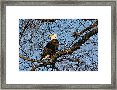 Whos Back There Framed Print by Dave Clark