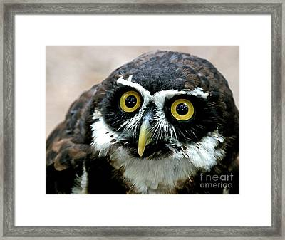 Whos Looking Now Framed Print by E Mac MacKay