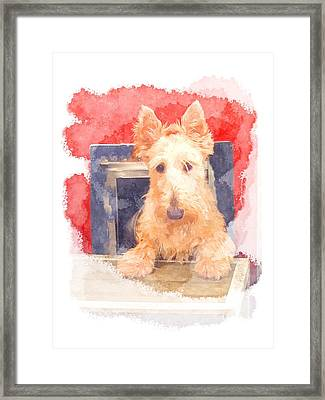 Whos That Dog In The Window? Framed Print by Image Takers Photography LLC - Carol Haddon