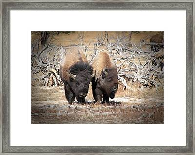 Who's The Boss Framed Print by Donna Kennedy