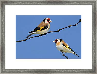 Who's The Prettiest One Of All Framed Print