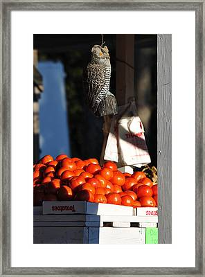 Who's Tomatoes Framed Print by Jan Amiss Photography