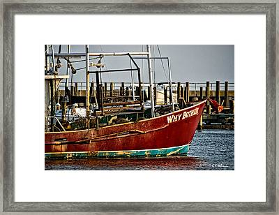 Why Bother Framed Print by Christopher Holmes