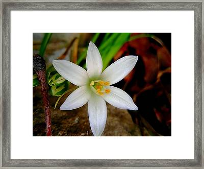 Why Hello There  Framed Print by Beth Akerman