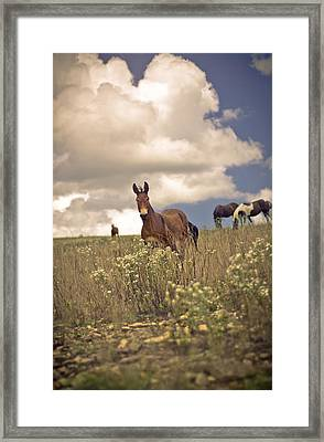 Why Hello Framed Print