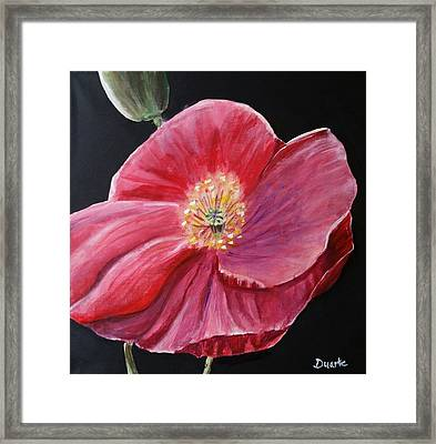 Shirley Poppy Framed Print by Carol Duarte