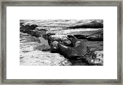 Why So Curious  Framed Print by Juergen Weiss