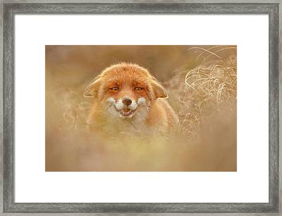 Why So Serious - Funny Fox Framed Print by Roeselien Raimond