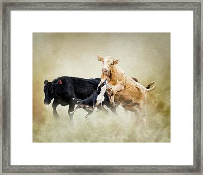 Why The Cow Jumped Over The Moon Framed Print