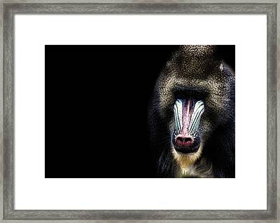 Why The Long Face Framed Print