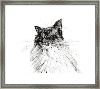 Why Framed Print by Vincent Alexander Booth