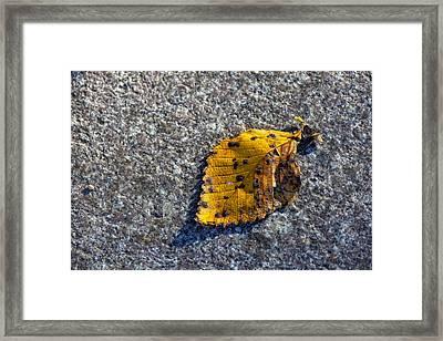 Why We Call It Fall Framed Print by Robert Ullmann