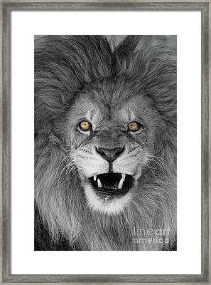 Wicked Black And White  T O C Framed Print by Judy Whitton