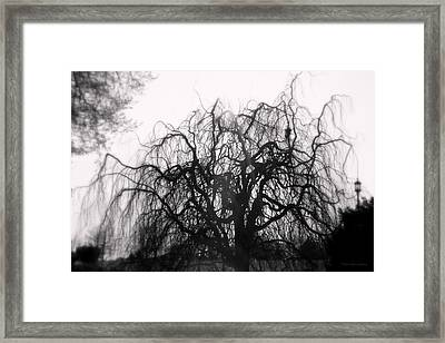 Wickedly Beautiful Framed Print by Deborah  Crew-Johnson