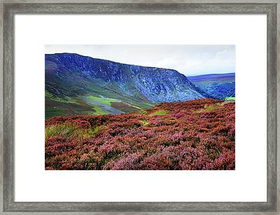 Framed Print featuring the photograph Wicklow Heather Carpet by Jenny Rainbow