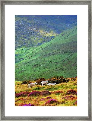Framed Print featuring the photograph Wicklow Pastoral by Jenny Rainbow