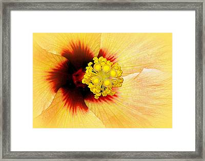 Wide Awake...... Framed Print