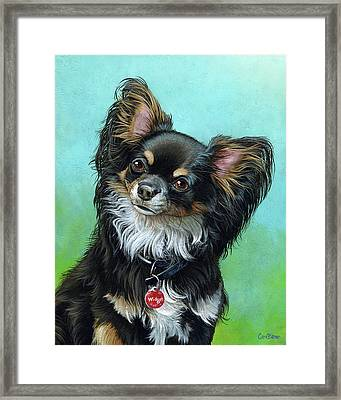 Widget The Chihuahua Framed Print by Cara Bevan