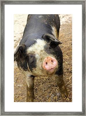 Framed Print featuring the photograph Wilbur by Viviana  Nadowski
