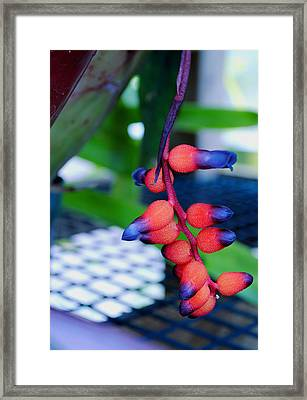 Framed Print featuring the photograph Wild About Bromeliads2 by Kate Word
