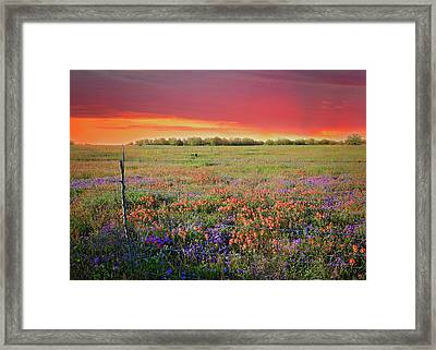 Wild About Texas Sunsets Framed Print by Lynn Bauer