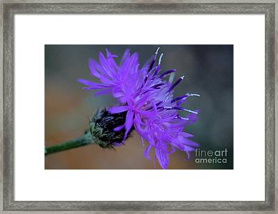 Wild And Beautiful 32 Framed Print