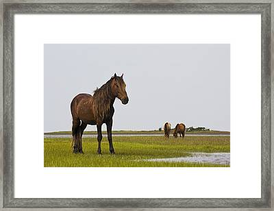 Wild And Free Framed Print by Bob Decker