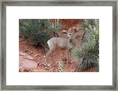 Wild And Pretty - Garden Of The Gods Colorado Springs Framed Print by Christine Till
