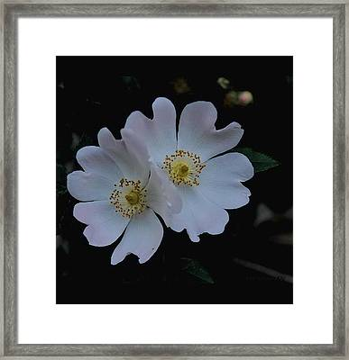 Wild And Tender Framed Print