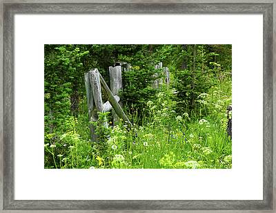 Framed Print featuring the photograph Wild And Wildflowers by Marie Leslie