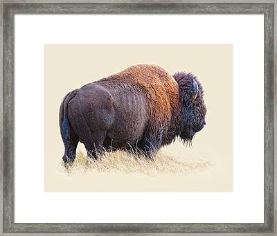 Wild And Wooly Framed Print by Dewain Maney