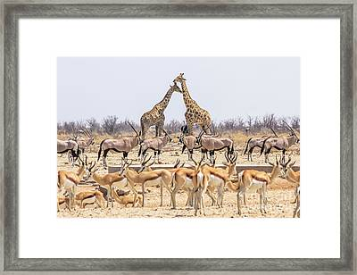 Wild Animals Pyramid Framed Print