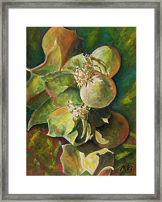 Wild Apples In Bloom Framed Print
