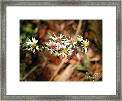 Framed Print featuring the photograph Wild Astors by Donna Brown