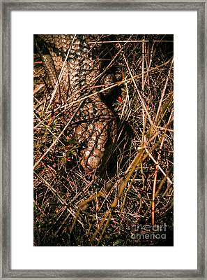 Wild Australian Blue Tongue Lizard Framed Print by Jorgo Photography - Wall Art Gallery