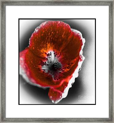 Wild Beauty In Red And White Framed Print by Debra Lynch