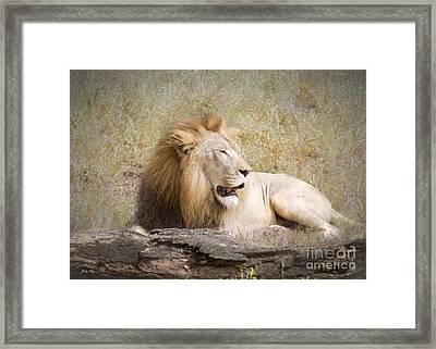 Wild Beauty Framed Print by Judy Kay