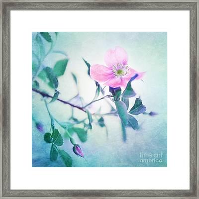 Wild Beauty Framed Print